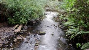 Julius River