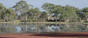 Reflections ... birds ... lovely mornings