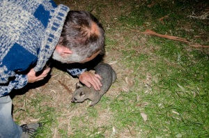 Friendly possums at Mannum!