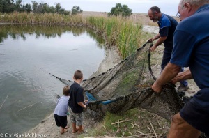 Netting a dam.  Kids had nets to pull the fish out with.