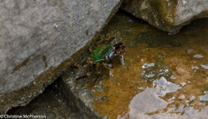 green and red crabs