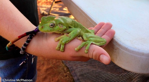 This little guy hung around for a couple of days in Port Hedland
