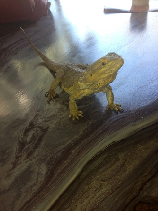 Our lizard friend on one of the beautiful rock tables