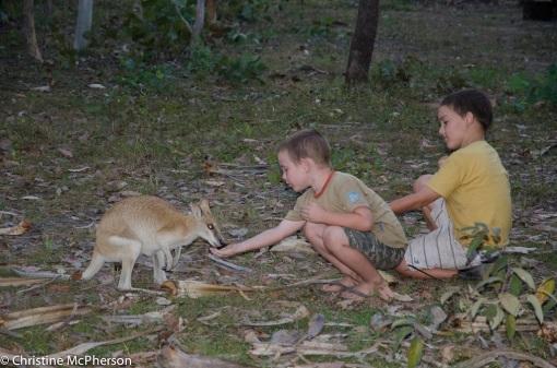 Feeding Chloe
