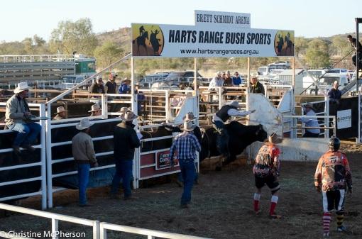 The Bull Ride