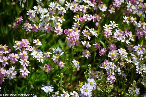 Beautiful desert wild flowers