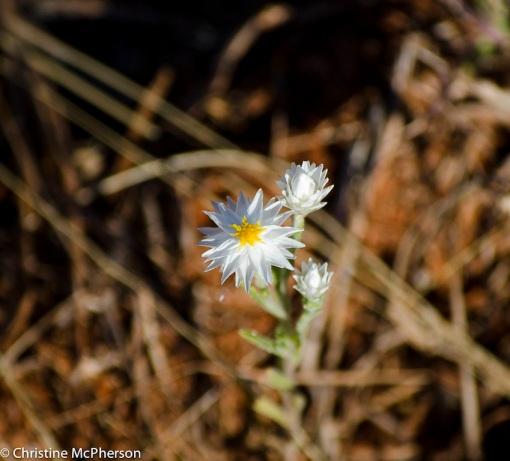 Love paper daisies