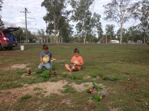 The boys feeding the Lorikeets the day we arrived